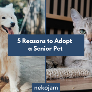 5 Reasons to Adopt a Senior Pet Today featured image