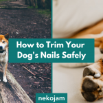 How to Trim Your Dog's Nails Safely