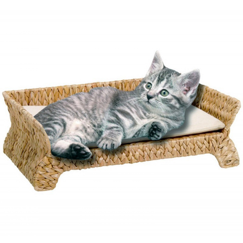 Cat supplies online malaysia