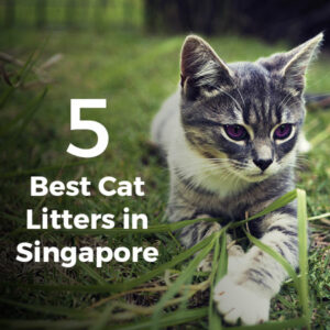 5 Best Cat Litters in Singapore