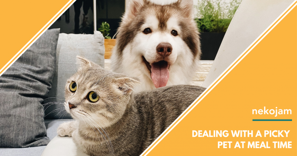 Dealing with a Picky Dog or Cat at Meal Time featured image