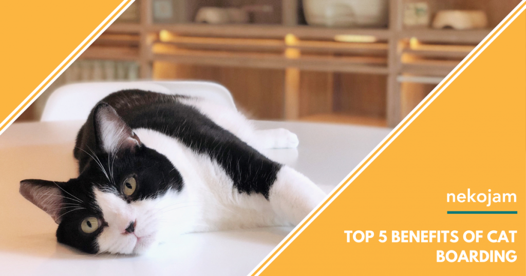 black and white cat at nekoya top five benefits of cat boarding
