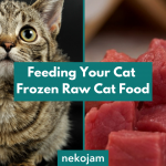 Feeding Your Cat Frozen Raw Cat Food featured image