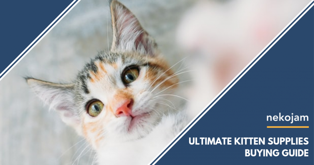 The Ultimate Kitten Supplies Buying Guide in Singapore