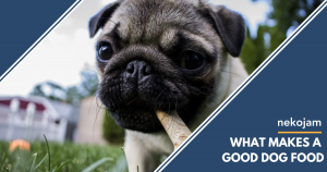 what makes a good dog food featured image