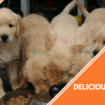 dog food toppers featured image
