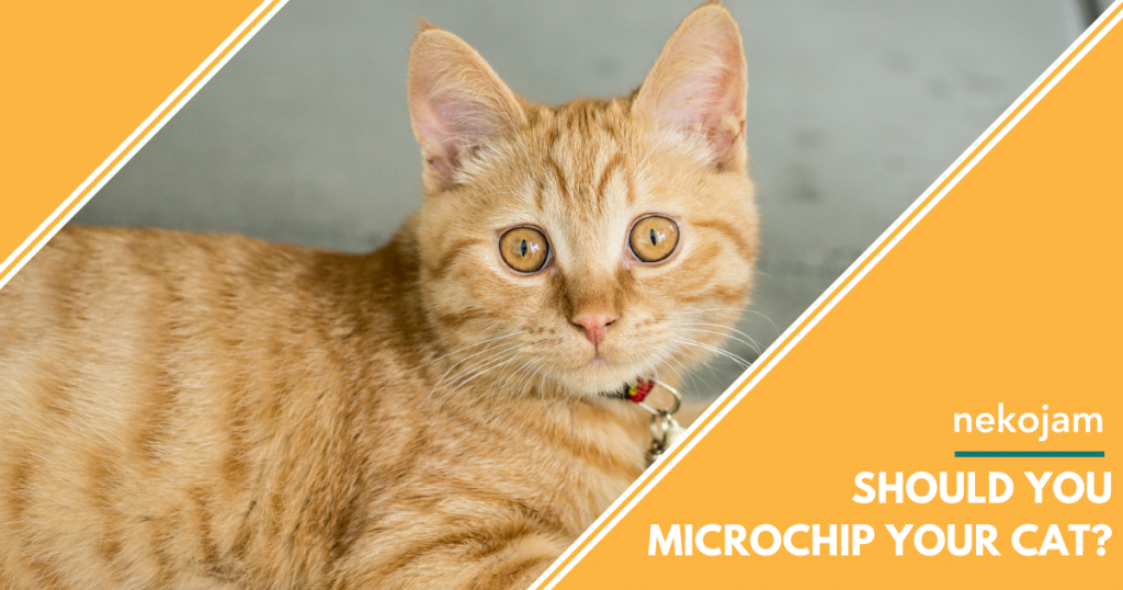 should you microchip your cat featured image