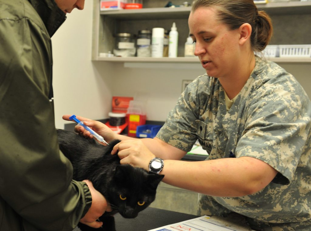woman injecting microchip into cat whiteman airforce base
