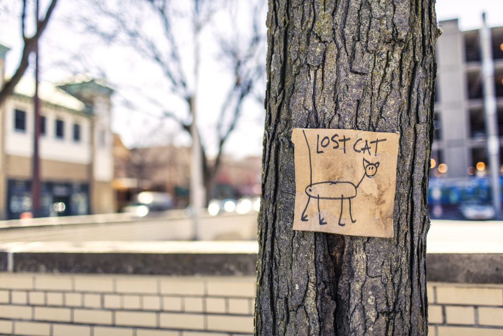 lost cat poster on tree trunk pixabay