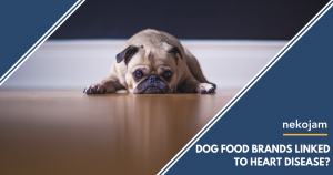 dog food brands linked to canine heart disease featured image