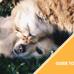 National Pet Hydration Awareness Month A Complete Guide to Keeping Your Pet Hydrated featured image