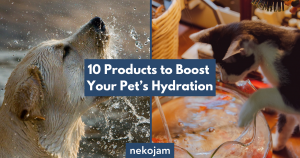 10 Products to Boost Your Pet's Hydration featured image