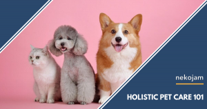 Here's the 101 on What Holistic Pet Care Really Means featured image
