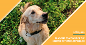 Here's Why You Should Take a Holistic Approach to Your Pet's Health Care featured image