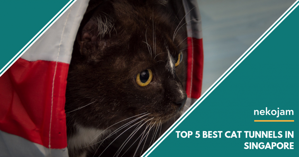 Top 5 Best Fancy & Unique Cat Tunnels in Singapore featured image