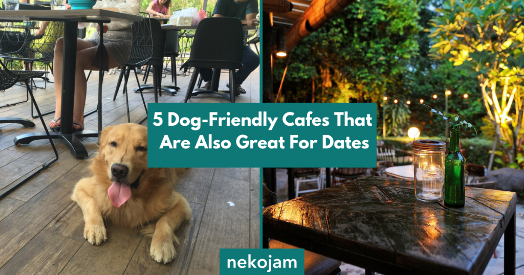 dog friendly cafes that are great for dates featured image