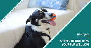 types of dog toys your pup will love featured image