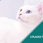 5 Places to Adopt a Cat in Singapore featured image