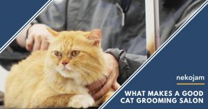 good cat grooming salon featured image